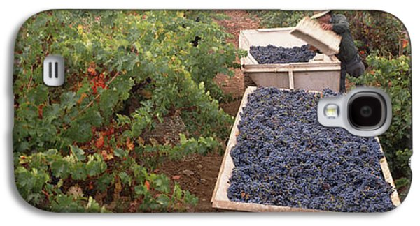 Harvesting Grapes In A Vineyard, Napa Galaxy S4 Case by Panoramic Images