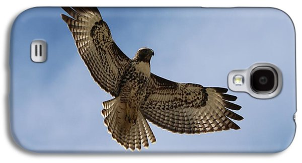 Hawk In Flight  Galaxy S4 Case