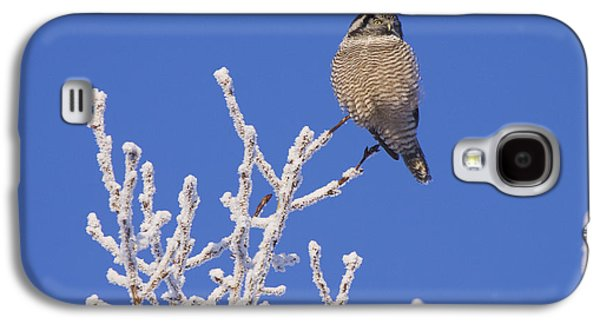 Hawk Owl Perched On Hoarfrosted Galaxy S4 Case by Doug Lindstrand