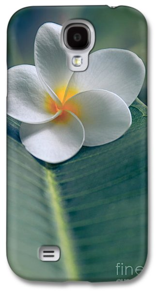 He Aloha No O Waianapanapa - White Tropical Plumeria - Hawaii Galaxy S4 Case by Sharon Mau