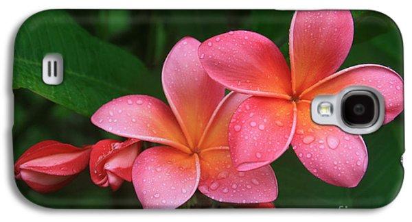 He Pua Laha Ole Hau Oli Hau Oli Oli Pua Melia Hae Maui Hawaii Tropical Plumeria Galaxy S4 Case
