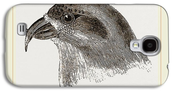 Crossbill Galaxy S4 Case - Head Of Crossbill by Litz Collection