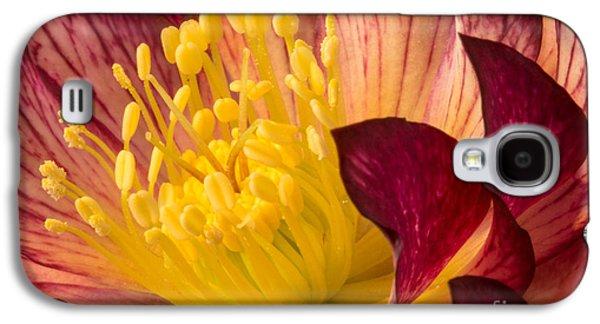 Hellebore Ruby Yellow Glow Galaxy S4 Case