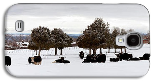 Herd Of Yaks Bos Grunniens On Snow Galaxy S4 Case by Panoramic Images