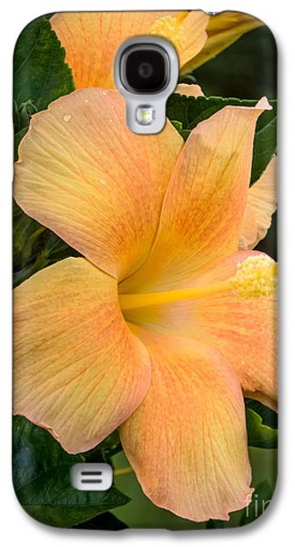 Hibiscus Flower Galaxy S4 Case by Zina Stromberg