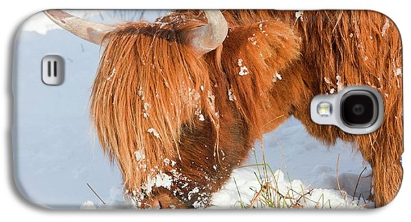 Highland Cattle Grazing Galaxy S4 Case by Ashley Cooper