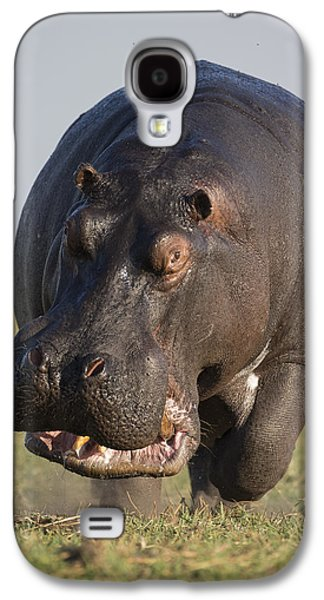 Hippopotamus Bull Charging Botswana Galaxy S4 Case by Vincent Grafhorst