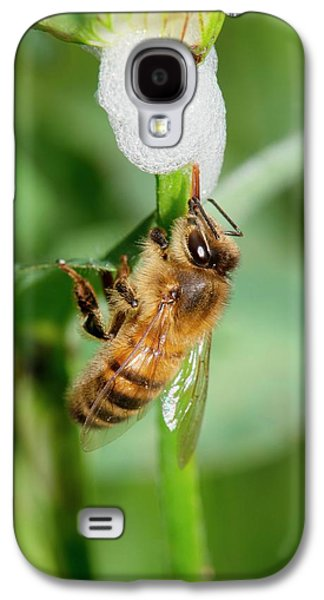Honey Bee Drinking From Cuckoo-spit Galaxy S4 Case