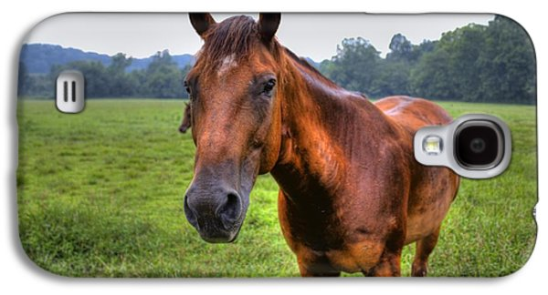 Horse In A Field Galaxy S4 Case