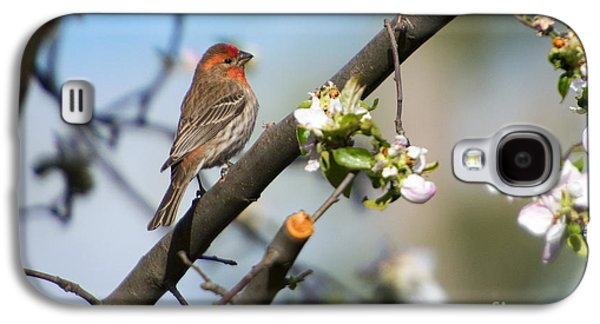 House Finch Galaxy S4 Case by Mike Dawson