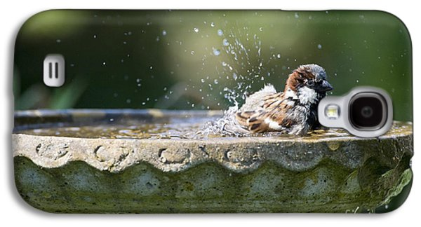 House Sparrow Washing Galaxy S4 Case by Tim Gainey