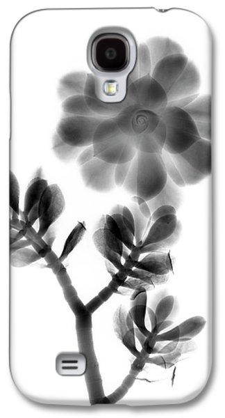 Houseleek And Foliage Galaxy S4 Case by Albert Koetsier X-ray