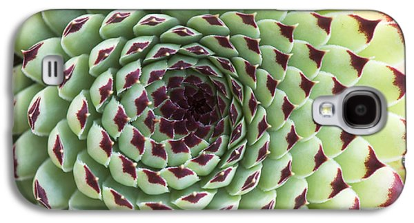 Houseleek Pattern Galaxy S4 Case by Tim Gainey