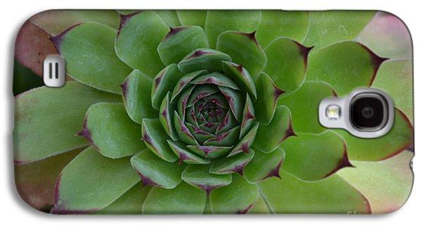 Houseleek Sempervivum Galaxy S4 Case