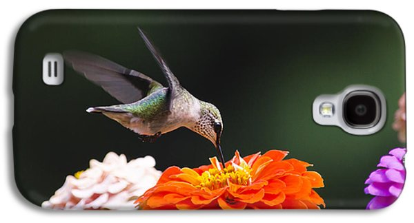 Hummingbird In Flight With Orange Zinnia Flower Galaxy S4 Case by Christina Rollo