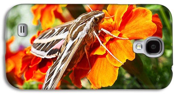 Hummingbird Moth On A Marigold Flower Galaxy S4 Case