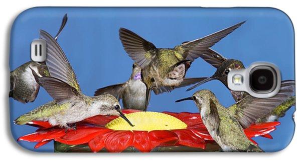 Feeding Young Galaxy S4 Case - Hummingbirds At Feeder by Anthony Mercieca
