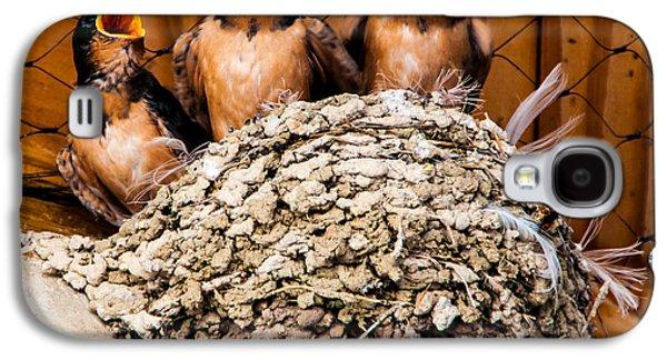 Hungry Baby Swallows - Antelope Island - Utah Galaxy S4 Case