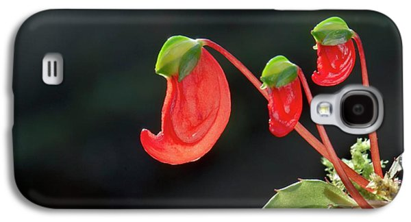 Impatiens Parasitica Flowers Galaxy S4 Case