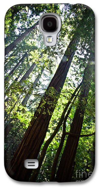In The Woods Galaxy S4 Case