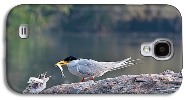 Indian River Tern Feeding Chick Galaxy S4 Case by K Jayaram