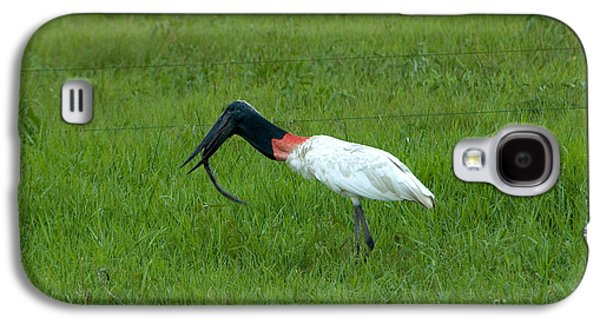 Jabiru Stork Swallowing An Eel Galaxy S4 Case by Gregory G. Dimijian, M.D.