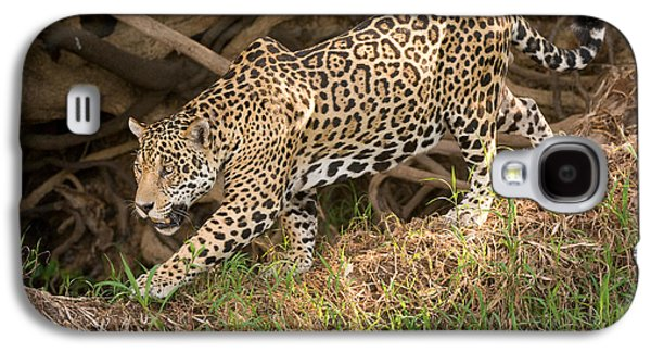 Jaguar Panthera Onca Foraging Galaxy S4 Case by Panoramic Images