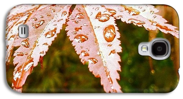 Colorful Galaxy S4 Case - Japanese Maple Leaves by Marianna Mills
