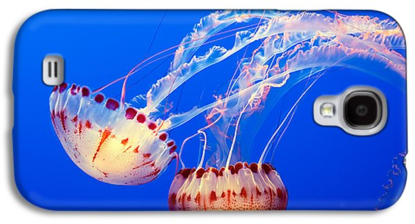 Jelly Dance - Large Jellyfish Atlantic Sea Nettle Chrysaora Quinquecirrha. Galaxy S4 Case