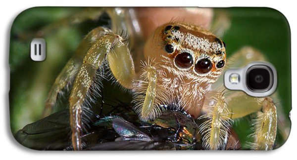 Jumping Spider 3 Galaxy S4 Case