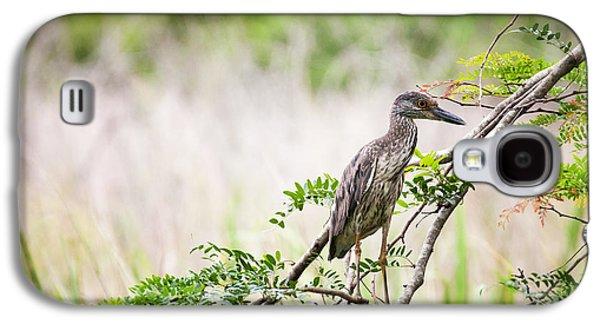 Juvenile Yellow Crowned Night Heron Galaxy S4 Case