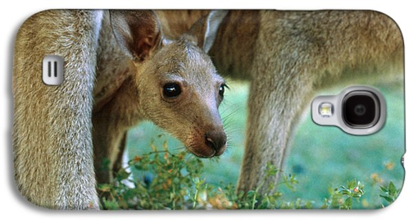 Kangaroo Joey Galaxy S4 Case by Mark Newman