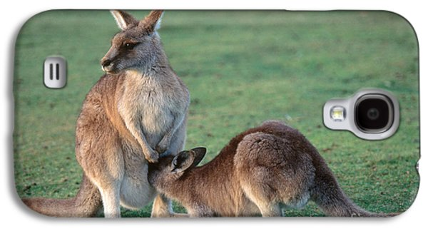 Kangaroo With Joey Galaxy S4 Case by Gregory G. Dimijian, M.D.