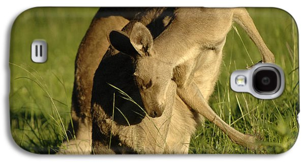 Kangaroos Taking A Bow Galaxy S4 Case by Bob Christopher