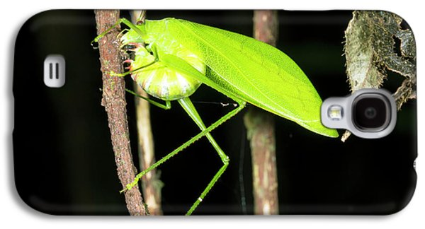 Katydid Laying Eggs Galaxy S4 Case by Dr Morley Read