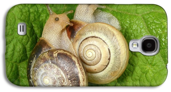 Kentish Snails Galaxy S4 Case by Nigel Downer