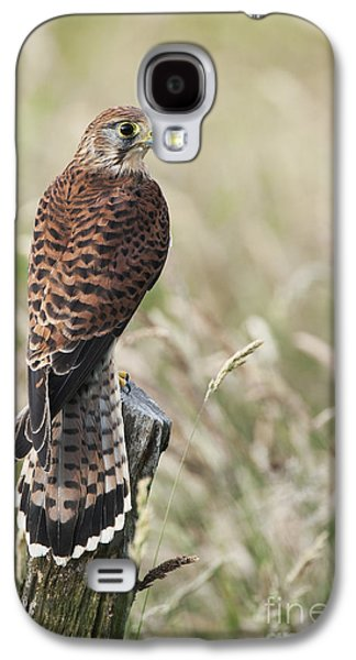 Kestrel Galaxy S4 Case by Tim Gainey
