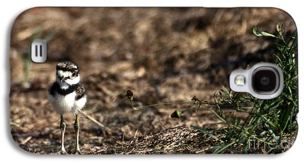 Killdeer Galaxy S4 Case - Killdeer Chick by Skip Willits