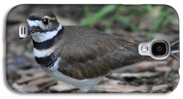 Killdeer Galaxy S4 Case - Killdeer by Dan Sproul