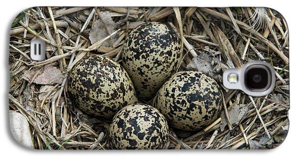 Killdeer Galaxy S4 Case - Killdeer Eggs In Nest by Linda Freshwaters Arndt