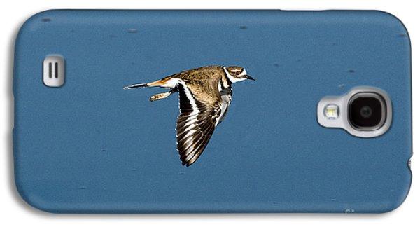 Killdeer In Flight Galaxy S4 Case by Anthony Mercieca
