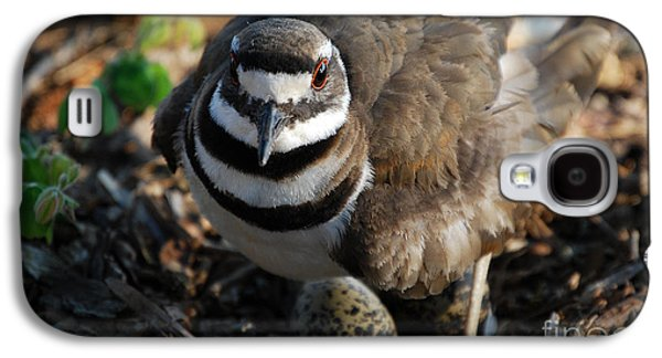 Killdeer Galaxy S4 Case - Killdeer Mom by Skip Willits