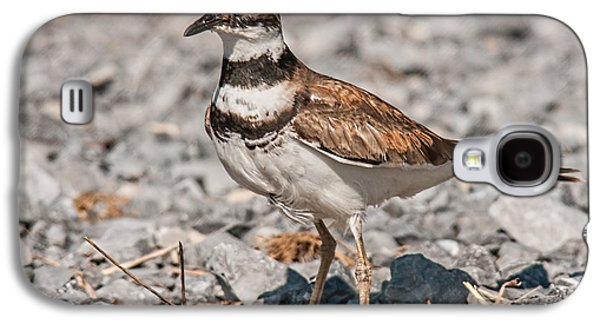 Killdeer Galaxy S4 Case - Killdeer Nesting by Lara Ellis