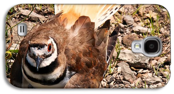 Killdeer Galaxy S4 Case - Killdeer On Its Nest by Chris Flees