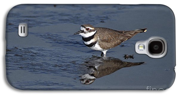 Killdeer Galaxy S4 Case - Killdeer Plover Charadrius Vociferus by Ron Sanford