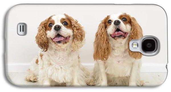 King Charles Spaniel Dogs Galaxy S4 Case by Amanda Elwell
