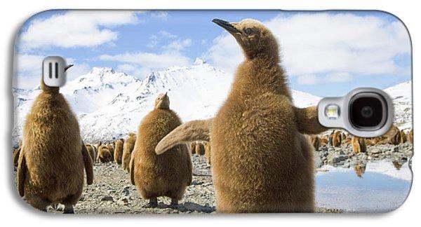 King Penguin Chicks South Georgia Island Galaxy S4 Case by Yva Momatiuk and John Eastcott