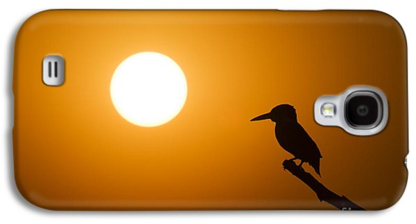 Kingfisher Sunset Galaxy S4 Case by Tim Gainey