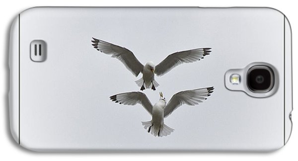 Kittiwakes Dancing In The Air Galaxy S4 Case by Heiko Koehrer-Wagner
