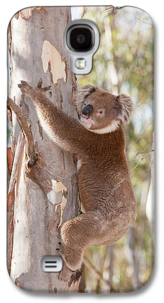 Koala Bear Galaxy S4 Case by Ashley Cooper